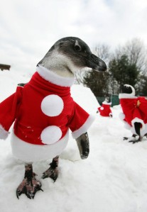 Penguins+Wearing+Santa+Claus+Costume+Attract+Yyb67gXTE4gl