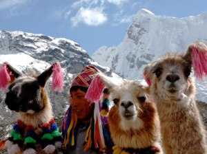 item0.rendition.slideshowWideHorizontal.llamas-alpacas-ausangate-trail-peru